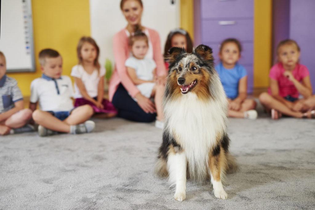 perros-aprendizaje-aula